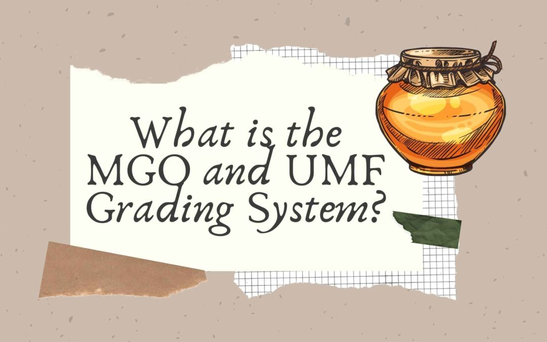 What is the MGO and UMF Grading System?