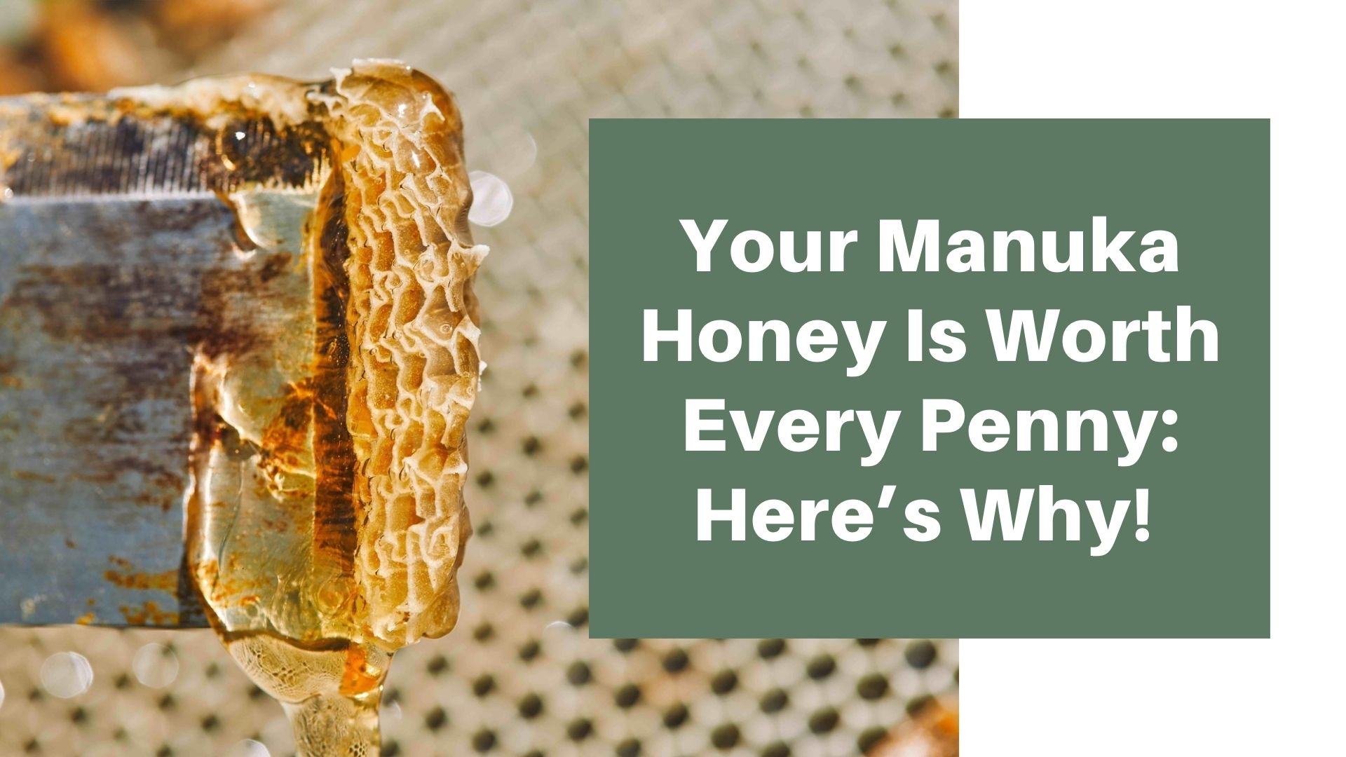 Your Manuka Honey Is Worth Every Penny: Here's Why!