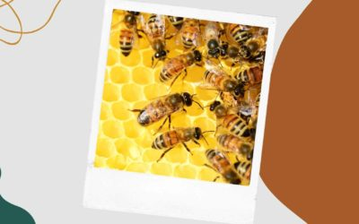 bees are not the only animals to make honey