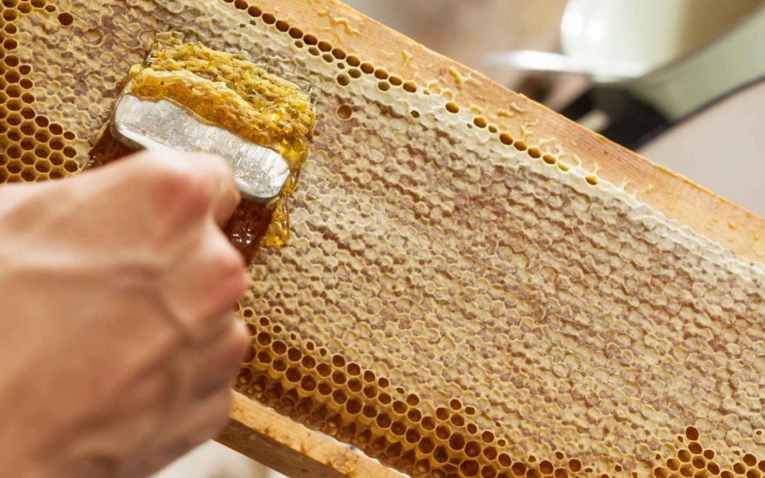 How Is Honey Extracted From The Honeycomb?