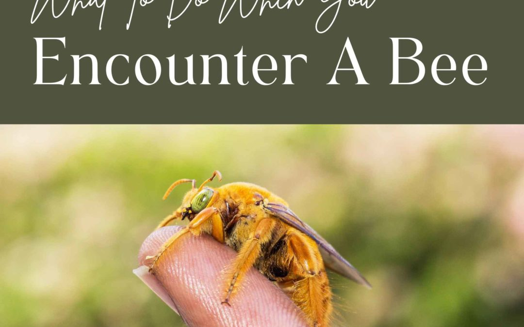 What To Do When You Encounter A Bee