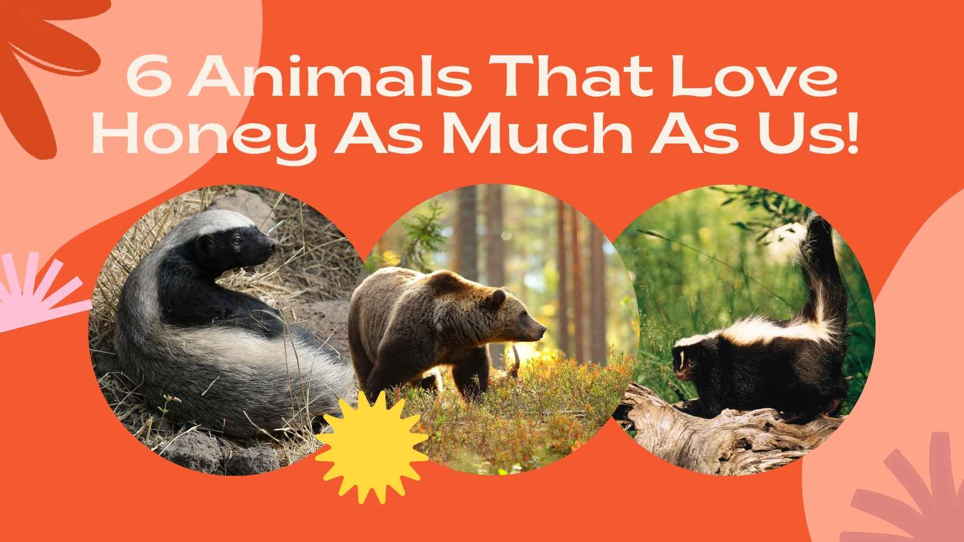 6 Animals That Love Honey As Much As Us!