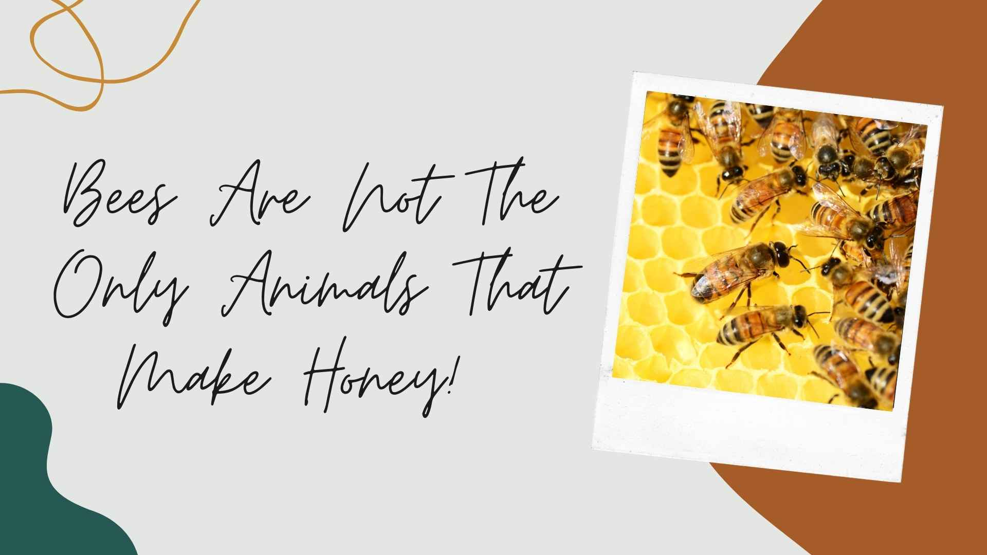 Bees Are Not The Only Animals That Make Honey!