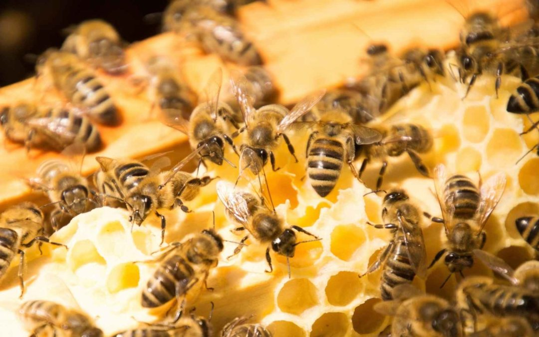 The Different Bees In A Bee Hive