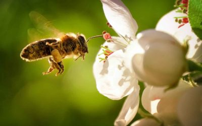 why the bees are disappearing