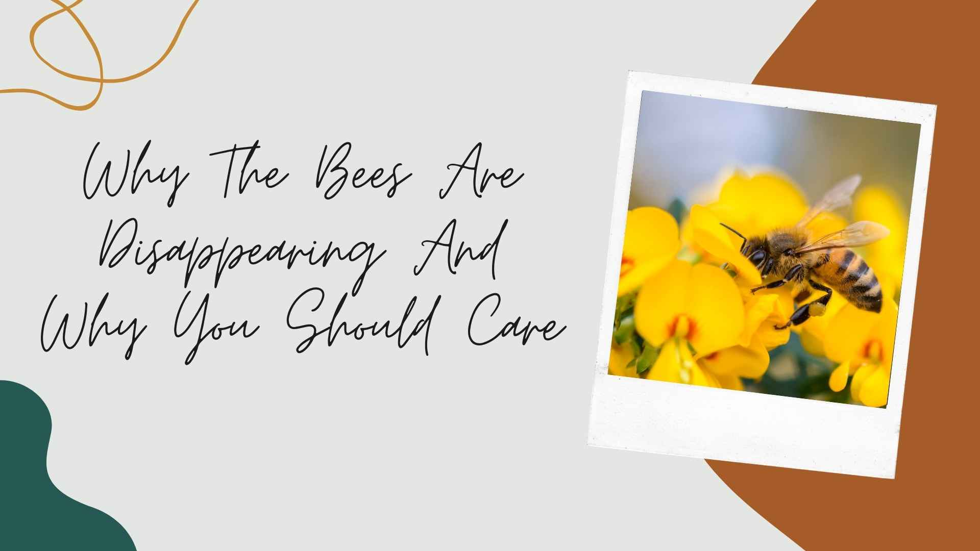 Why The Bees Are Disappearing And Why You Should Care