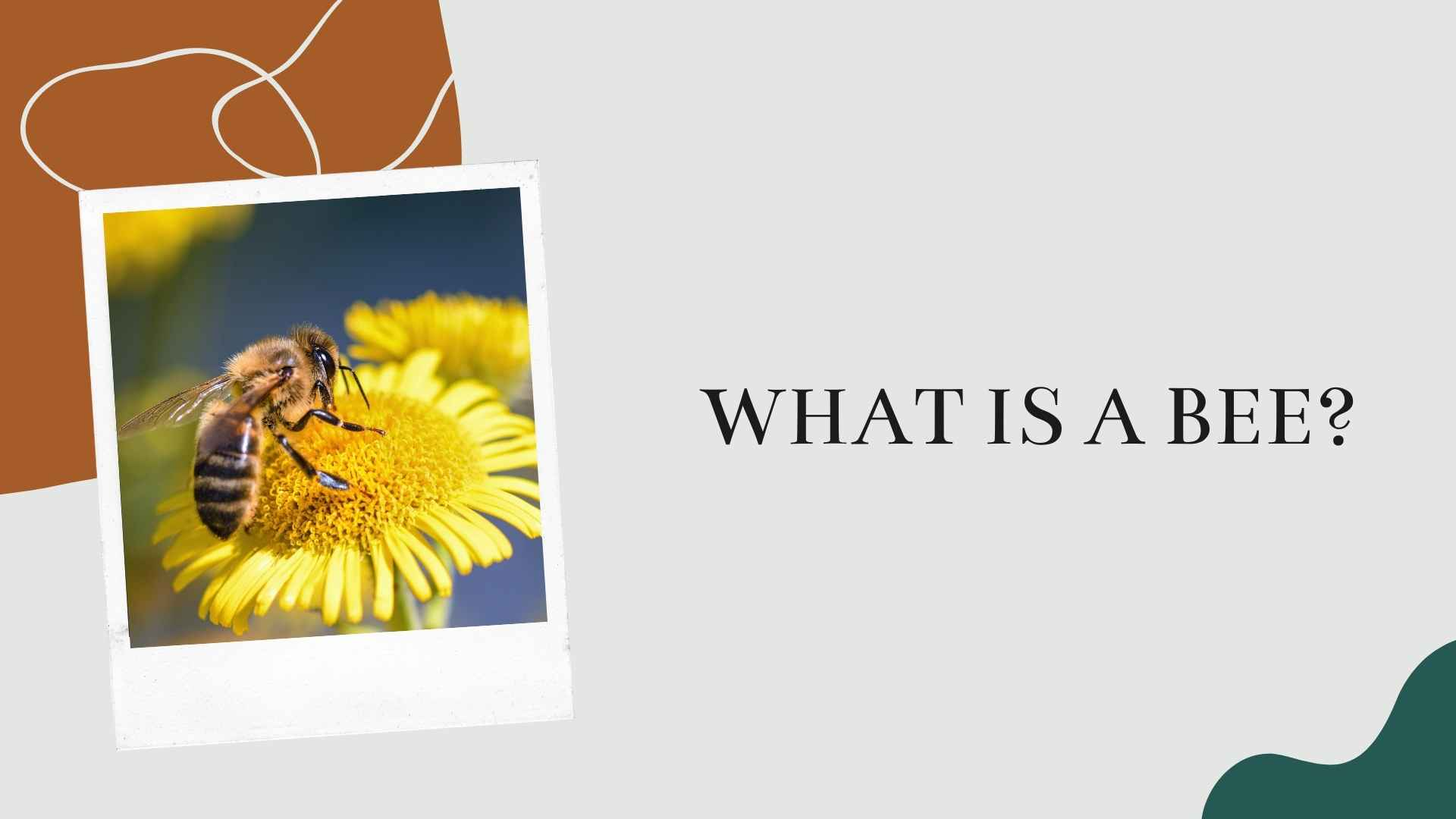 what is a bee
