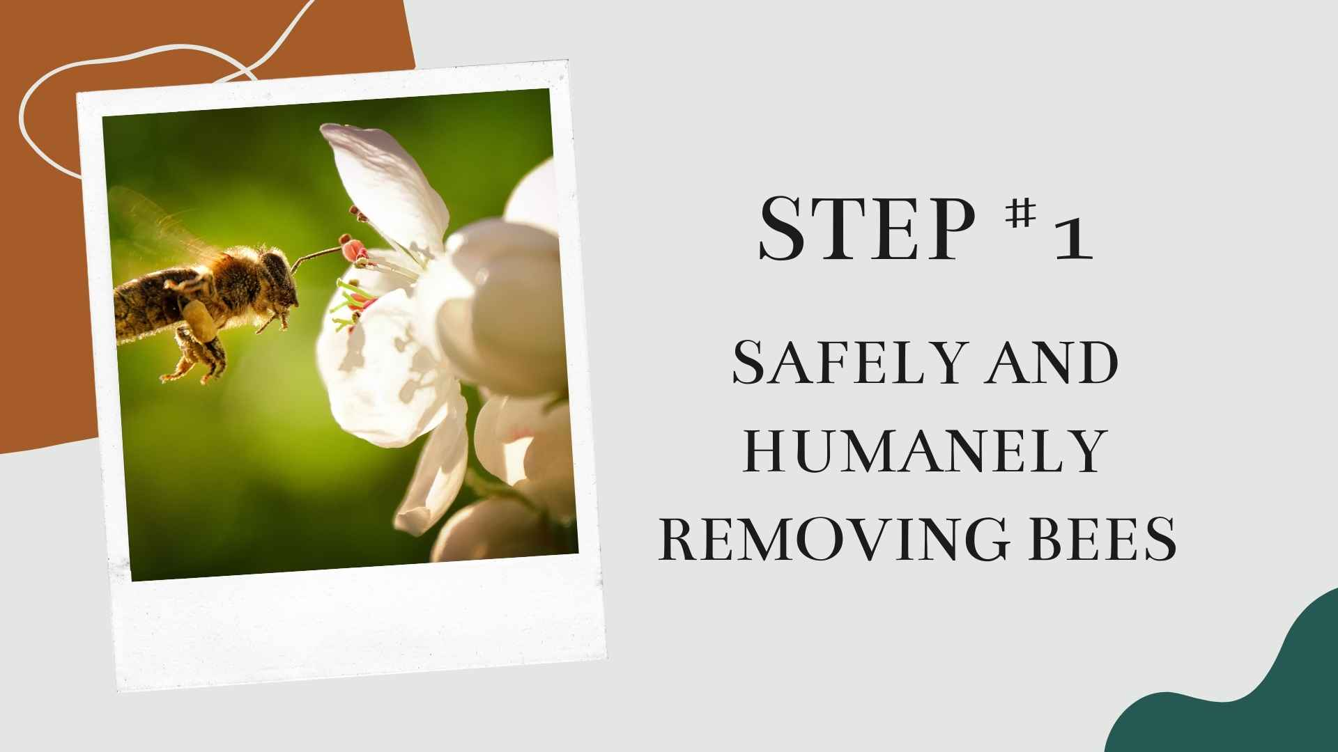 Step #1 Safely And Humanely Removing Bees