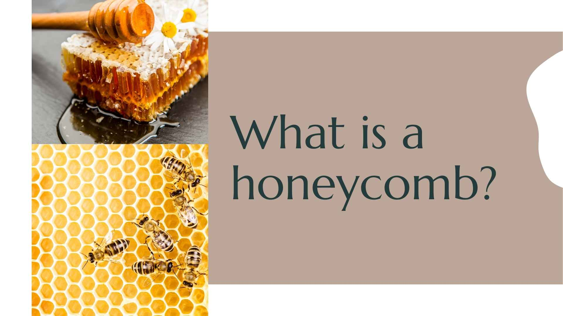 what is a honeycomb