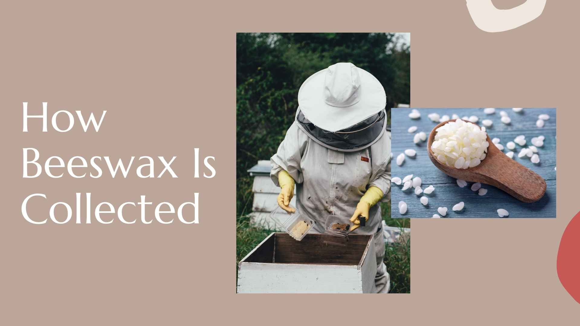 how beeswax is collected