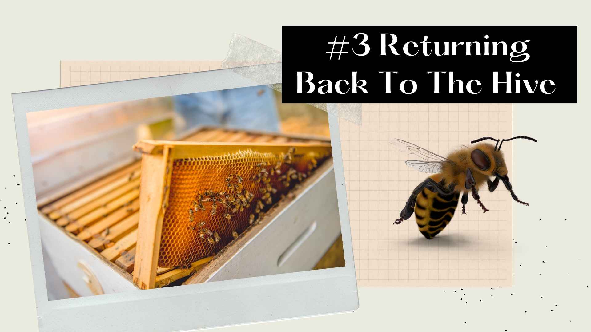 returning back to the hive