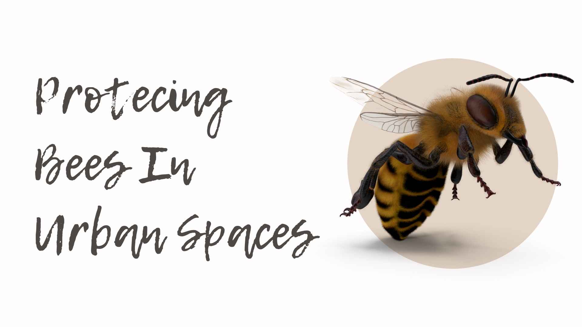 protecting bees in urban spaces